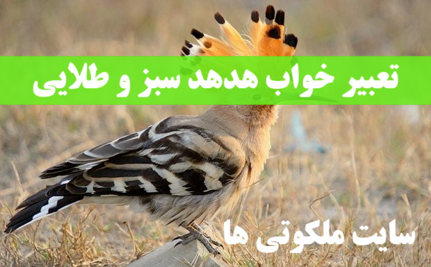 تعبیر خواب هدهد سبز و طلایی - پرنده هدهد گرفتن در خواب تعبیرش چیست