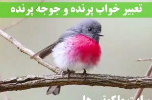 تعبیر خواب پرنده و جوجه پرنده - دیدن پرنده در قفس تعبیرش چیست