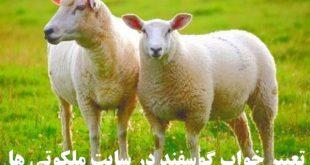 تعبیر خواب گوسفند و گوشت گوسفند - دیدن گوسفند قربانی در خواب تعبیرش چیست