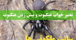 تعبیر خواب عنکبوت و نیش زدن عنکبوت و عنکبوت سیاه و بزرگ