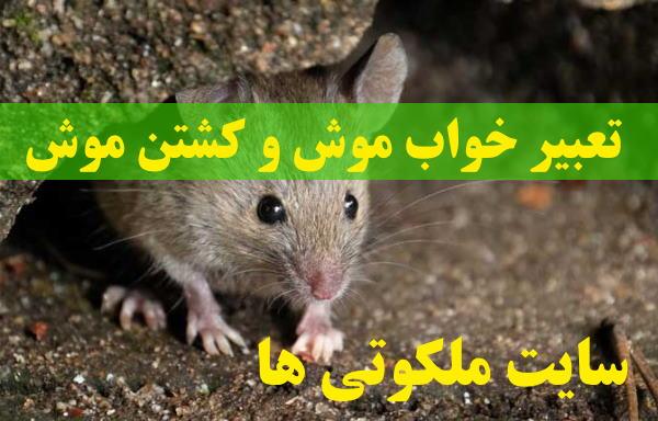 تعبیر خواب موش و کشتن موش - دیدن فضله موش در خانه تعبیرش چیست
