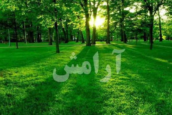ذکر قرآنی آرامش دهنده برای ایجاد آرامش روح و روان و آرامش دل