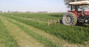 تعبیر خواب زمین کشاورزی و شخم مزرعه و کاشتن بذر در کشتزار