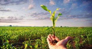 ذکر و دعای زراعت کاری و کشاورزی و درخت کاری و کاشتن بذر