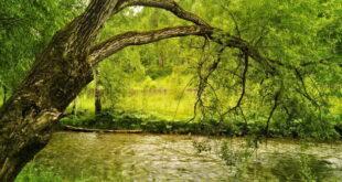 ذکر بسم الله برای شفای بیماری و رهایی و خلاصی از بیماری ها