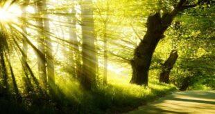 ذکر بسم الله برای نجات از شر ظالم و دشمن