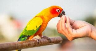 تعبیر خواب انواع پرندگان و غذا دادن به پرنده و دیدن پرنده در قفس
