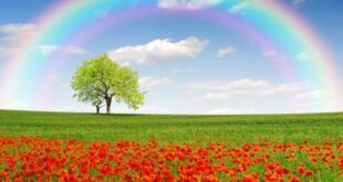 دعای طلب شفاعت بیماری از امام باقر برای شفای مریض بستری
