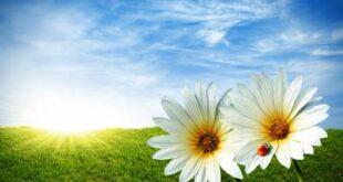 دعا و نسخه قرآنی برای افزایش روزی و رزق و غنی شدن و توانگری