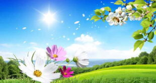 نماز حاجت بخت گشایی و ازدواج سریع الاجابه حضرت علی (ع)