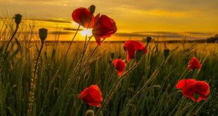 نماز طلب حاجت و غنی شدن و افزایش روزی و گشایش در زندگی