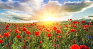 دعای حضرت علی برای رزق و روزی و مال و ثروت فراوان و حلال