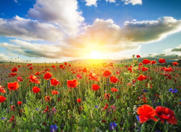 دعای رفع دلسردی و اختلاف زن و شوهر و افزایش مهر و محبت آنها