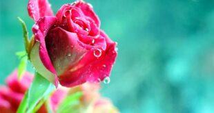 دعای زبان بند قوی برای ازدواج جهت بستن زبان مخالفان و بدخواهان ازدواج