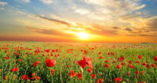 دعای طلب روزی و جلب رزق و روزی فراوان از امام صادق (ع)