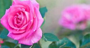 خواص سوره واقعه برای مهر و محبت و صلح و آشتی و دوستی بین افراد
