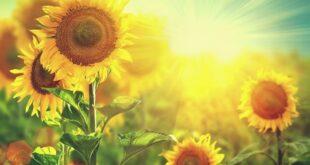 تعبیر خواب تابستان و گرمای شدید تابستان و برف در تابستان در خواب