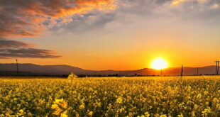 خواص دعای نور برای خیر و برکت در خانه و افزایش روزی در خانه