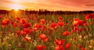 دعای عزیز شدن در میان خلق و مردم و محبوبیت زیاد در میان خلایق
