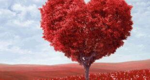 دعای محبت آویز به درخت برای جلب محبت و افزایش مهر و محبت